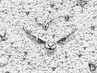 02-birds